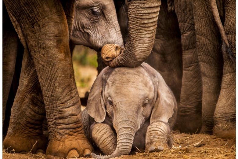 Слоны уезжают из столицы фото