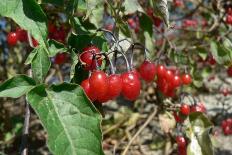 ягоды в Германии