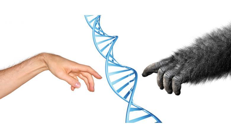 концепция генетической эволюции приматов фото