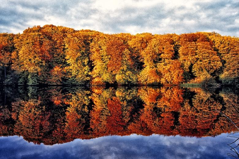 Лес на острове Рюген отражается в озере фото