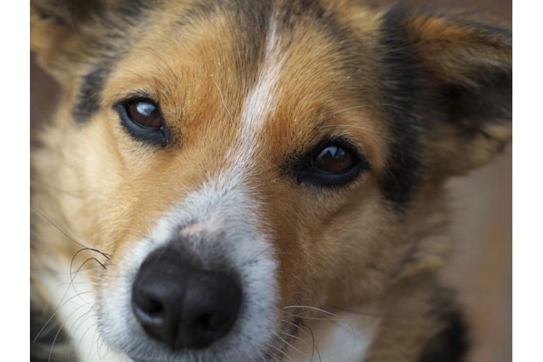 морда красивой собаки крупным планом фото