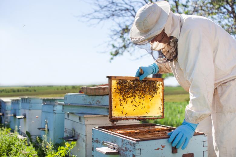 пчеловод на пасеке фото