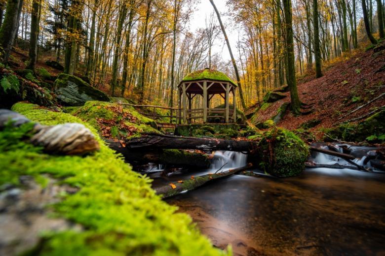 Пфальцский лес осенью фото