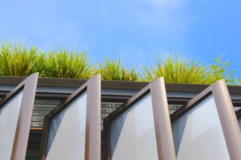 трава на крыше дома фото