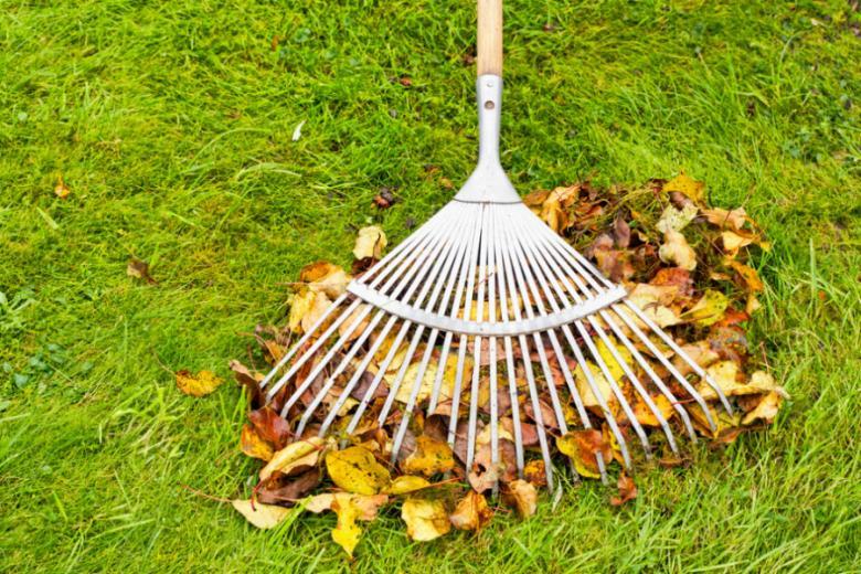 Уборка листьев граблями фото