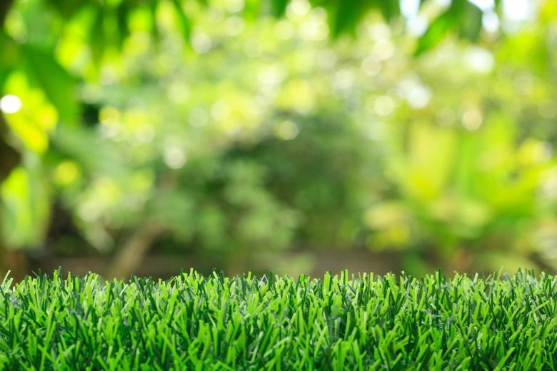 зеленый газон с близкого расстояния фото