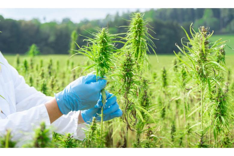 человек в перчатках ухаживает за растениями фото