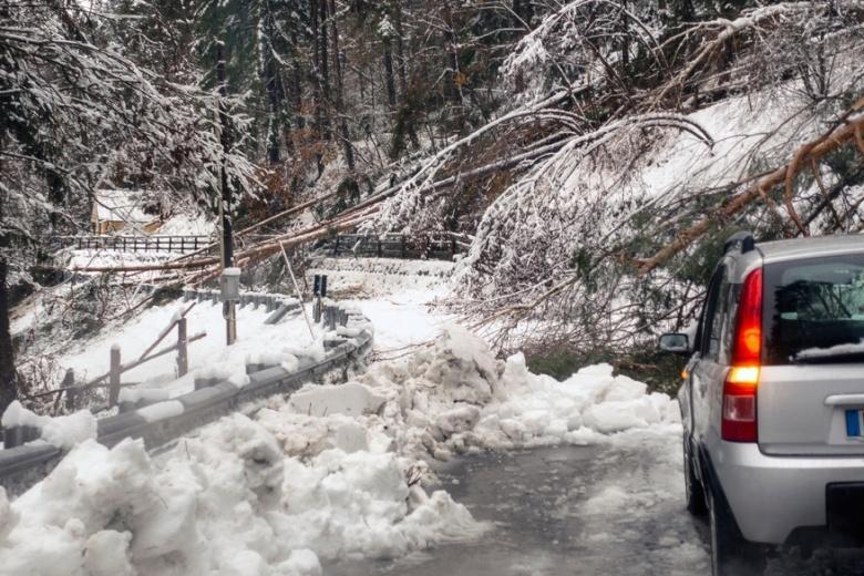 дерево на заснеженной трассе перегородило путь машине фото