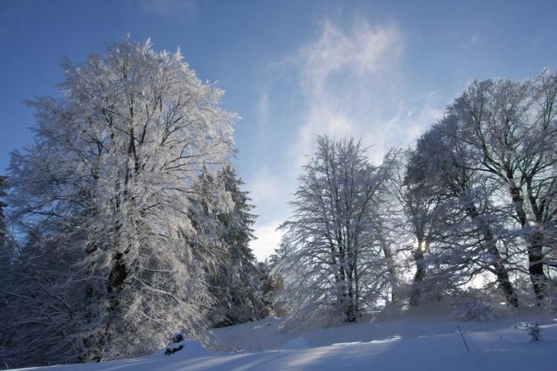 Погода в Германии в феврале 2021 года фото 1