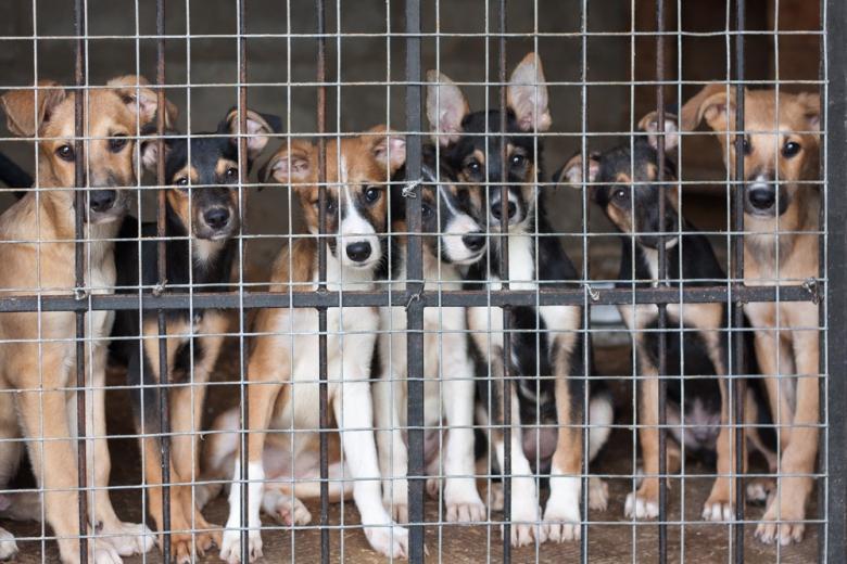 Приюты для животных в Германии испытывают серьёзные финансовые трудности фото 1