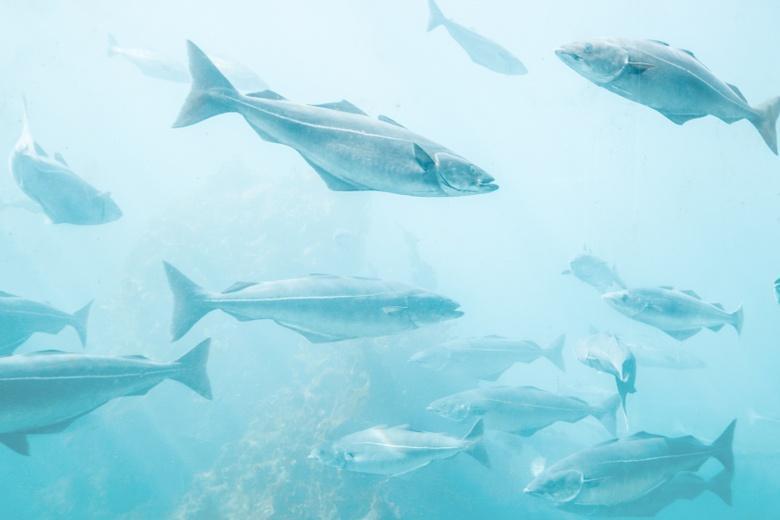 Малоподвижной и мелкой рыбы становиться больше из-за рыболовов фото