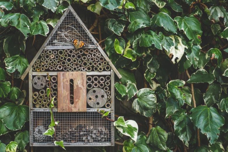 о защите насекомых фото