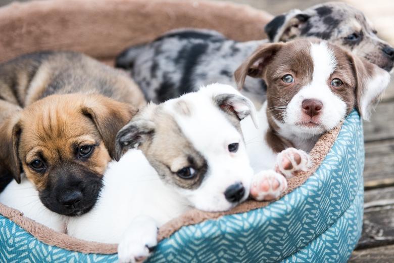 Контрабандисты перевозили щенков для наживы, не беспокоясь об их здоровье фото