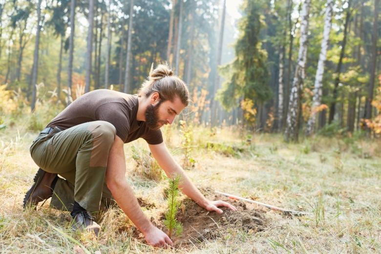 молодой мужчина высаживает дерево на опушке леса фото