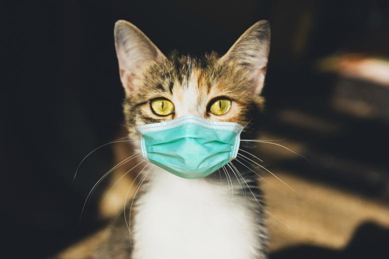 vakcinu-protiv-koronavirusa-dlya-zhivotnyh