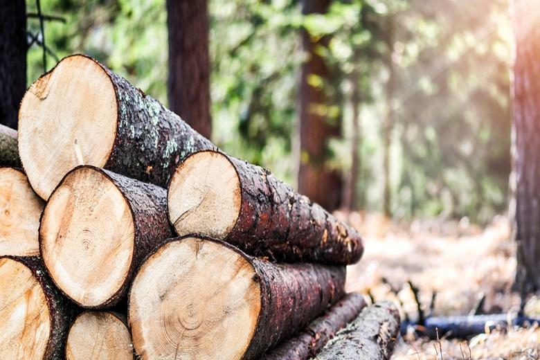 Вырубка лесов влияет на распространение инфекций фото