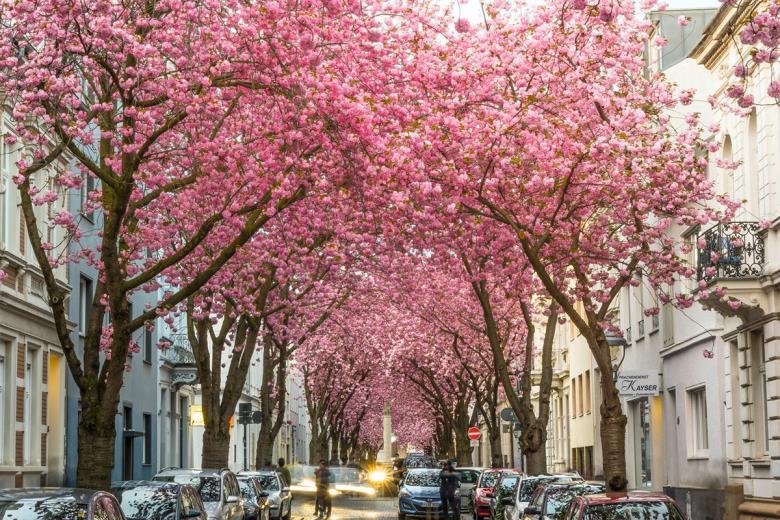 Бонн. Фото: Stefan Widua / Unsplash.com