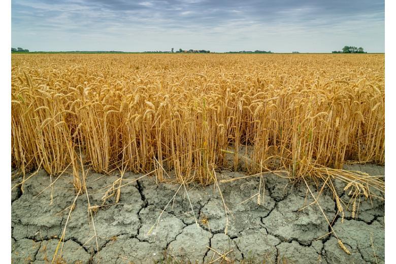 В Германии засуха