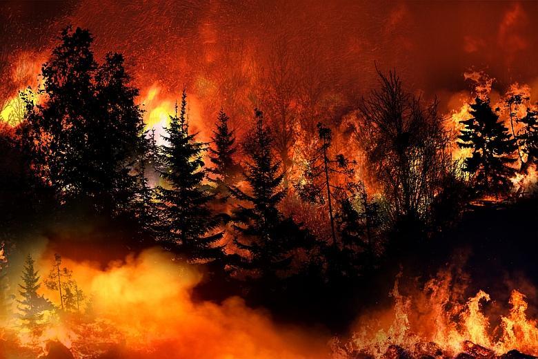 риск лесных пожаров