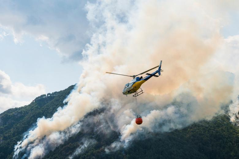 Лесные пожары Фото: Автор: Arcansel / shutterstock.com
