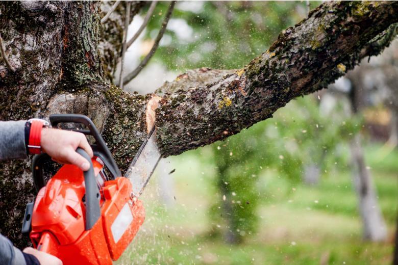 Соседские споры в Германии: обрезка деревьев Фото: bogdanhoda/shutterstock.com