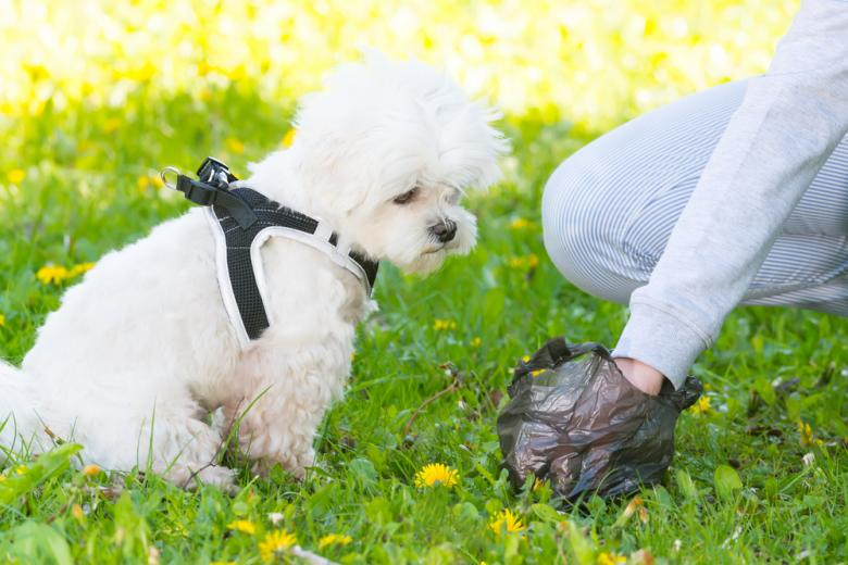 в Израиле базу ДНК собак / Фото: Monika Wisniewska / shutterstock.com