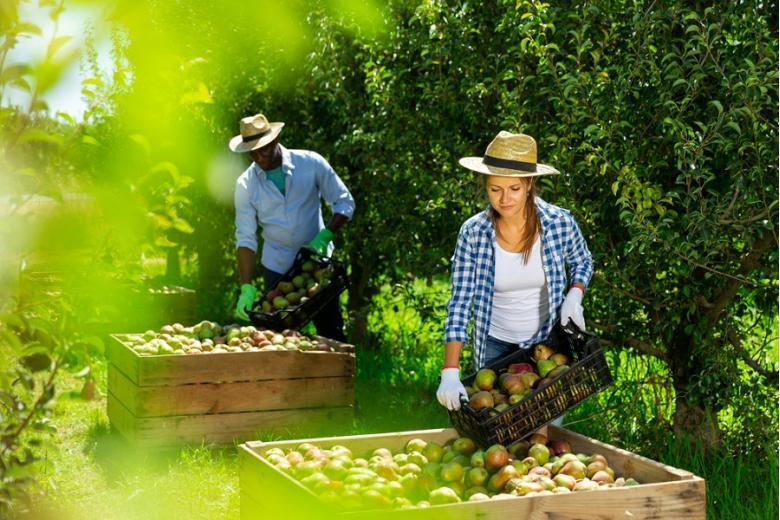 Очень восстребованы разнорабочие в аграрном хозяйстве. Фото: Iakov Filimonov / shutterstock.com
