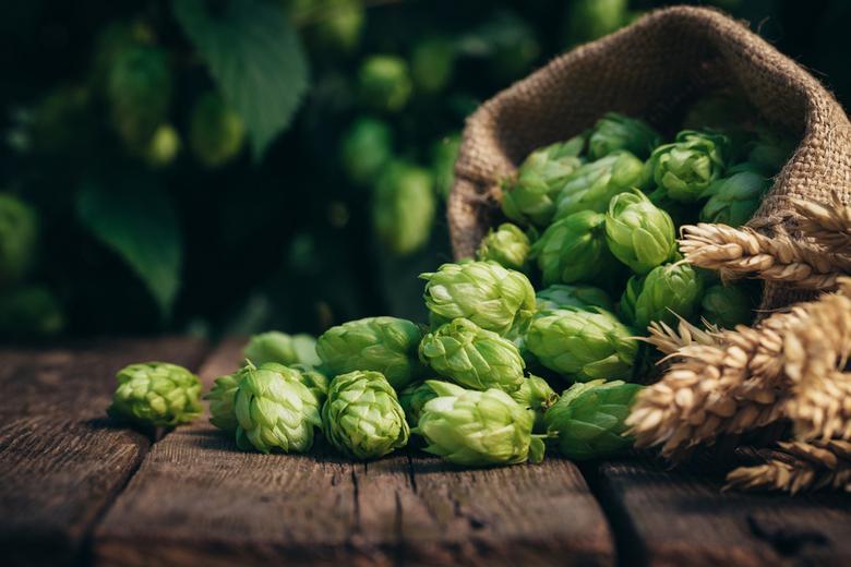 Пива стали пить меньше Фото: Автор: Stone36 / shutterstock.com