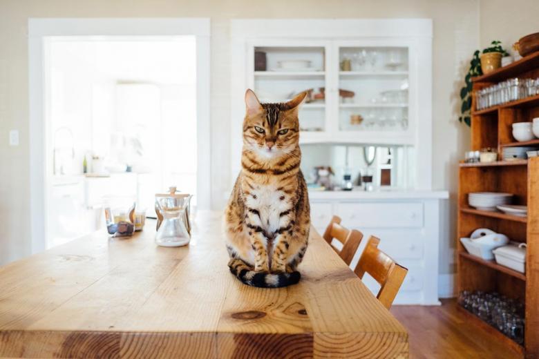 При определенных условиях домашние любимцы становятся источником заражения глистами. Фото: Paul Hanaoka / Unsplash.com