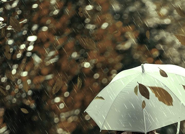 Дожди и порывы ветра Фото: Автор: ractapopulous / pixabay.com