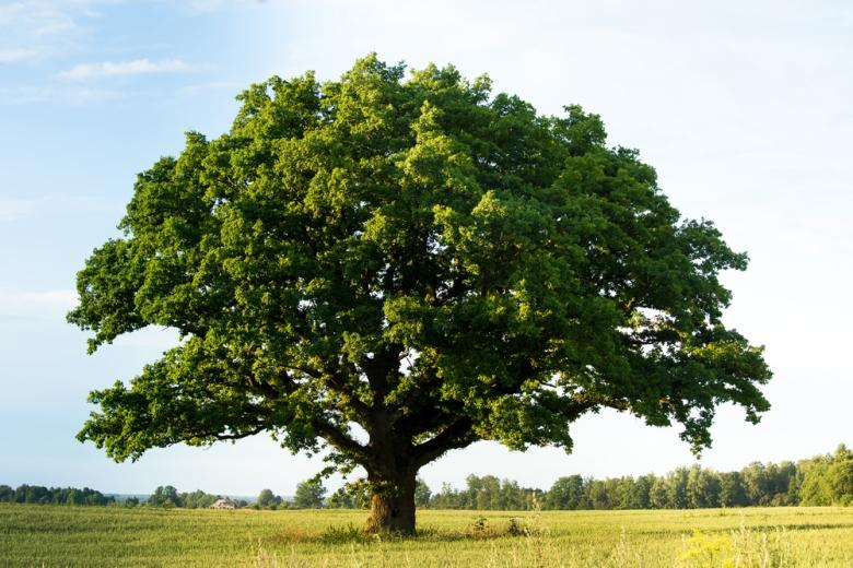 деревья – такие же чувствующие существа, как люди, животные или рыбы