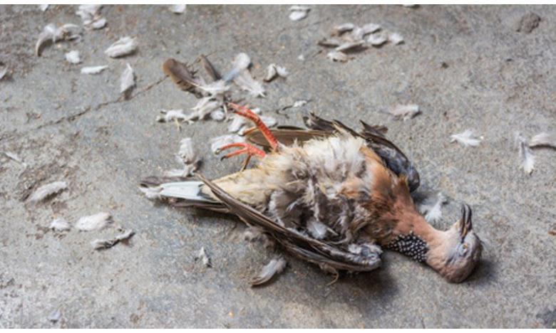 В Германии – вспышка птичьего гриппа? фото 1
