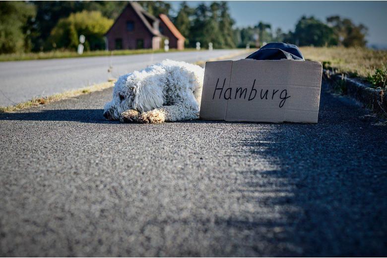 Все магистрали в Германии станут платными? фото 1