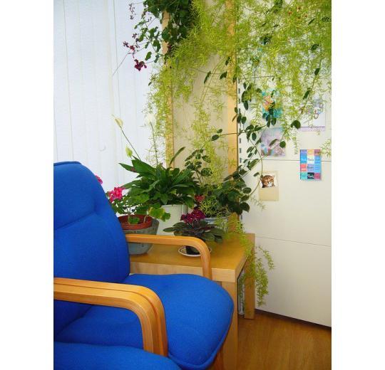 комнатные растения на столе и стене фото
