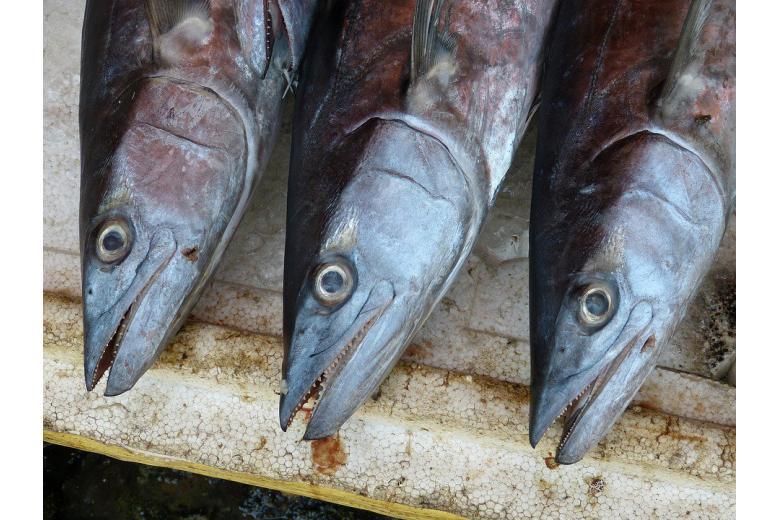Онлайн-супермаркеты Германии продают испорченную рыбу? фото 1