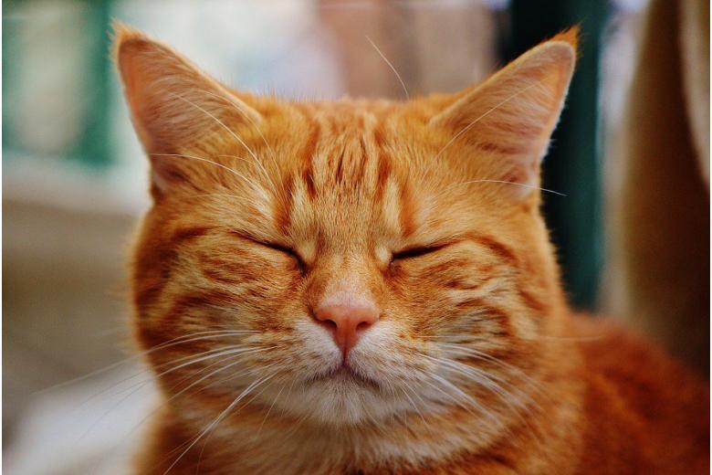 реклама с котиками-профессиональными актерами фото
